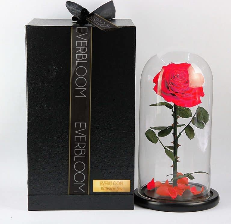beauty beast rose